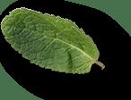 mint-leaves-2a.png
